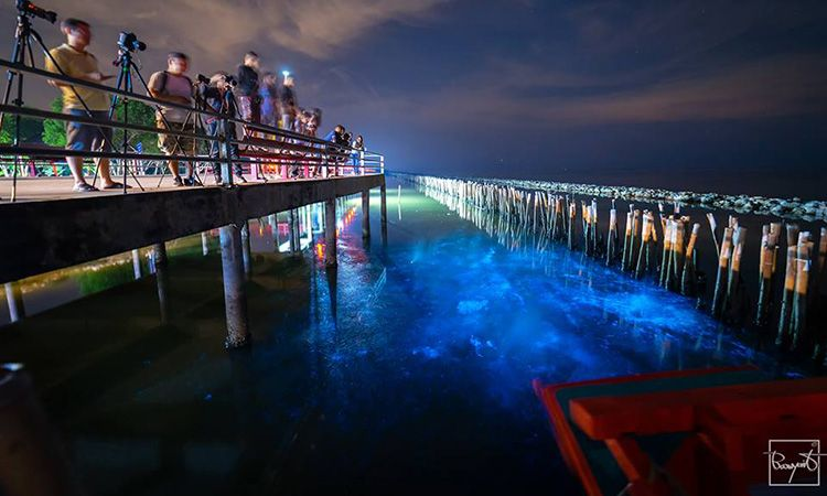"""""""แพลงก์ตอนเรืองแสง"""" ปรากฏการณ์ทางธรรมชาติสุดอัศจรรย์ ที่สะพานแดง จ.สมุทรสาคร"""
